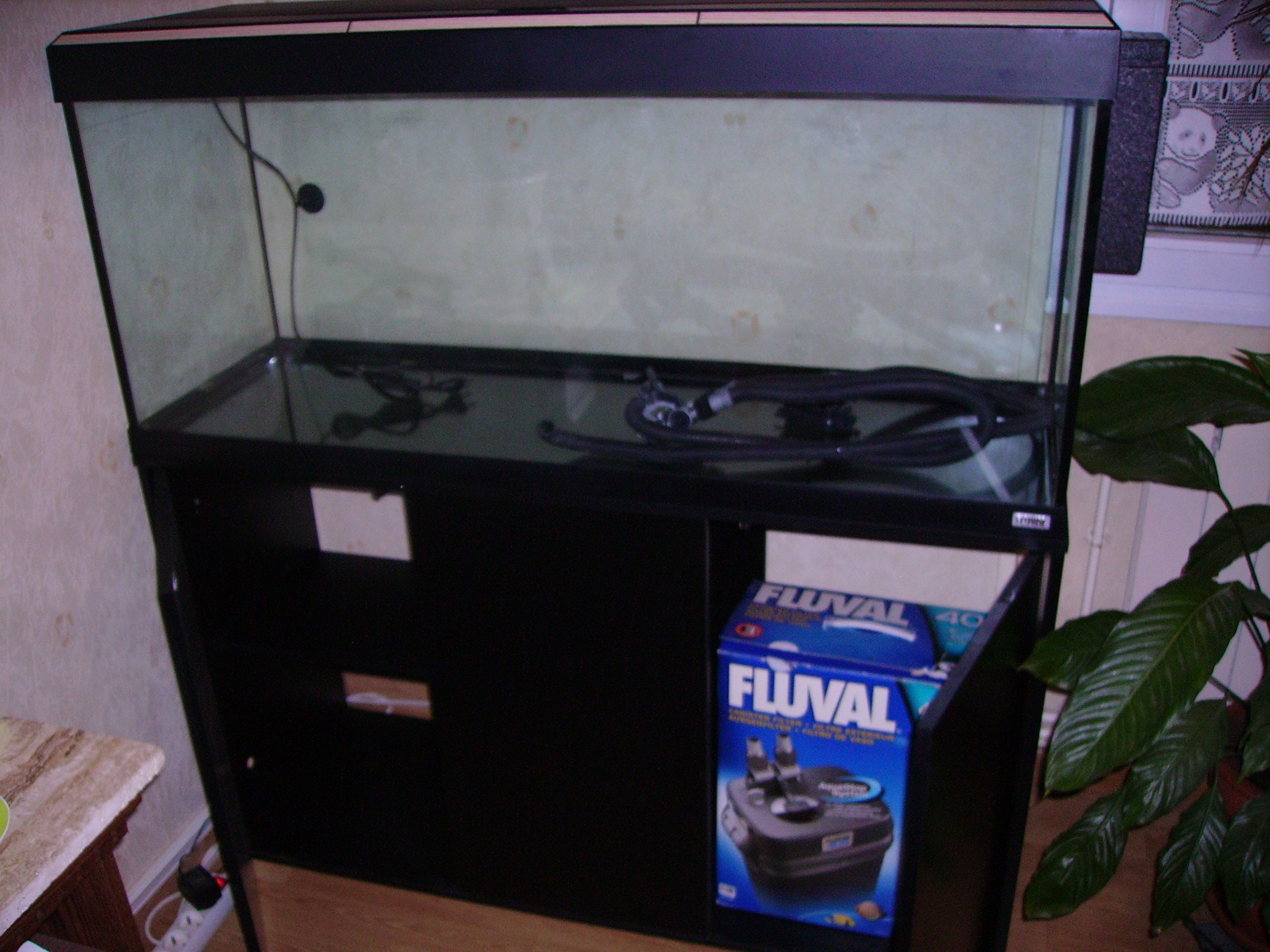 aquariophilia photos de poissons. Black Bedroom Furniture Sets. Home Design Ideas